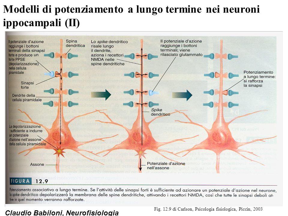 Modelli di potenziamento a lungo termine nei neuroni ippocampali (II)