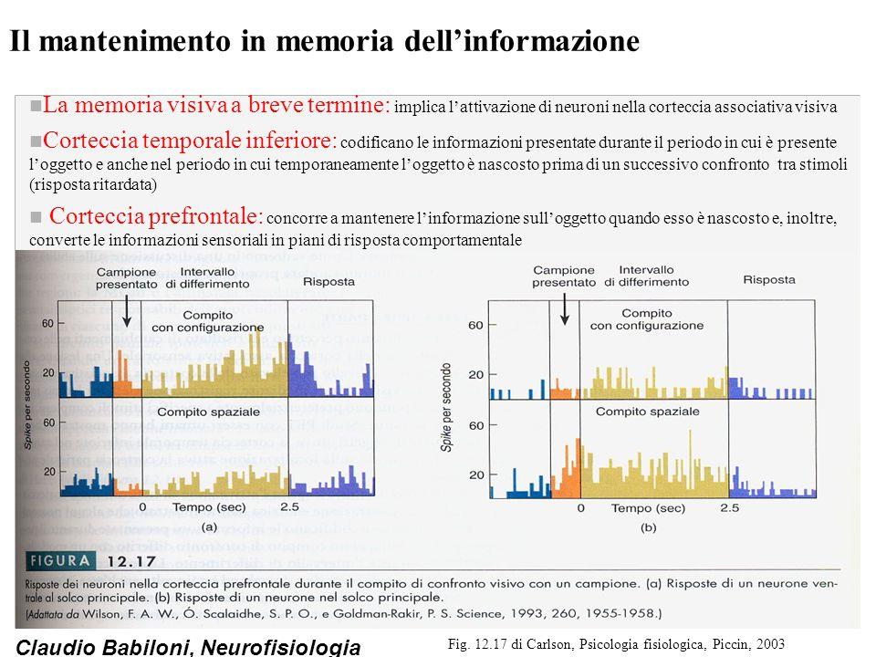 Il mantenimento in memoria dell'informazione