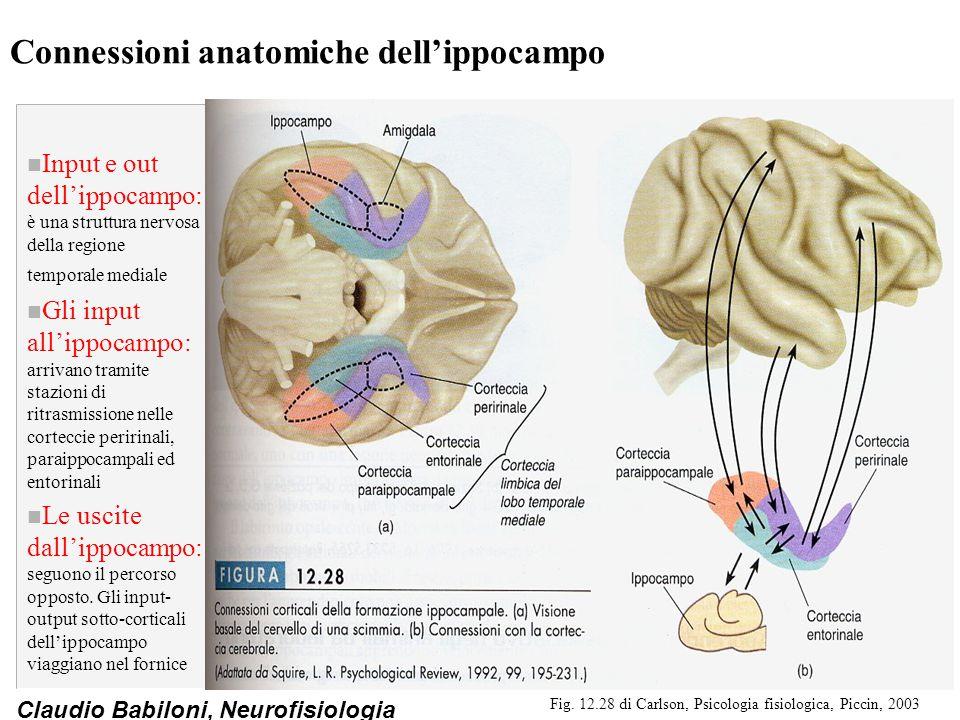 Connessioni anatomiche dell'ippocampo