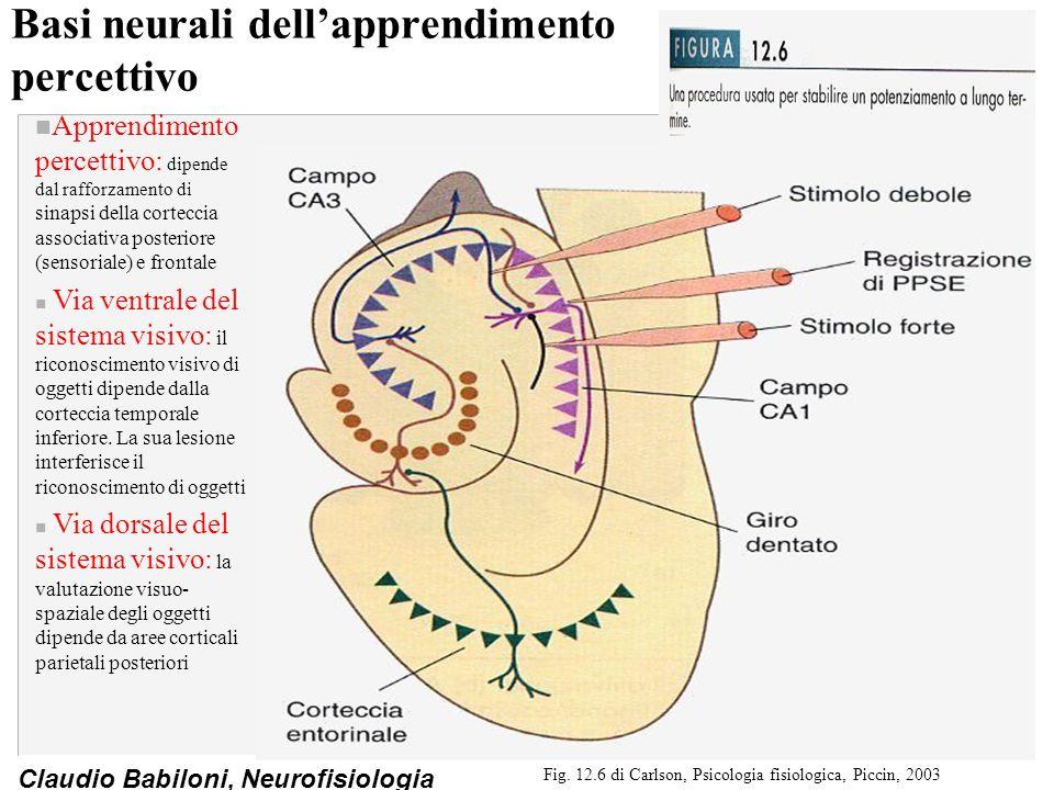 Basi neurali dell'apprendimento percettivo