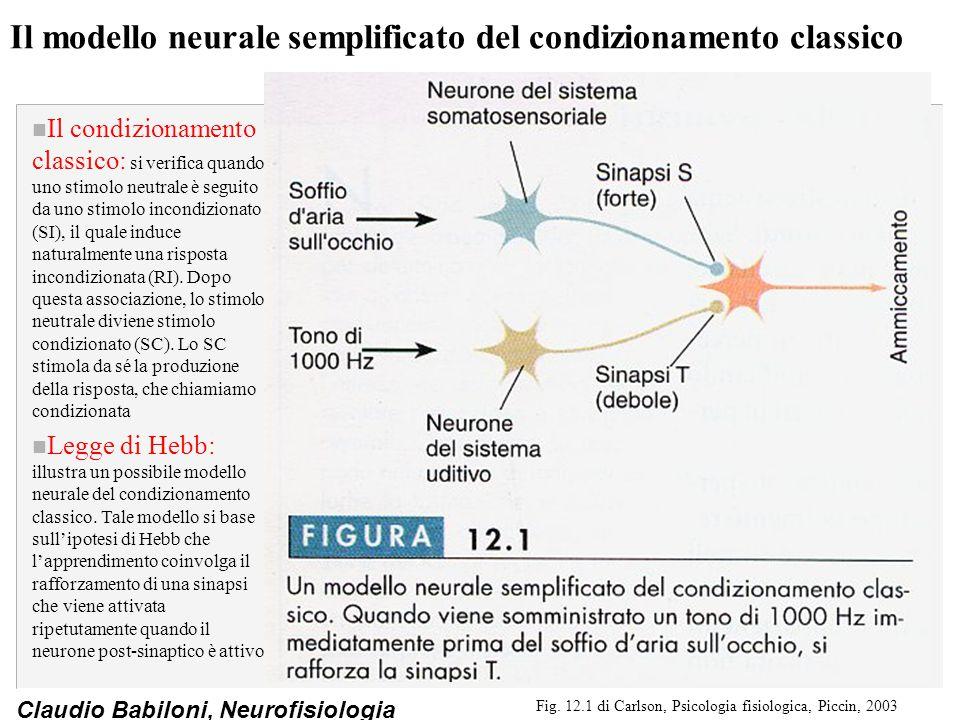 Il modello neurale semplificato del condizionamento classico