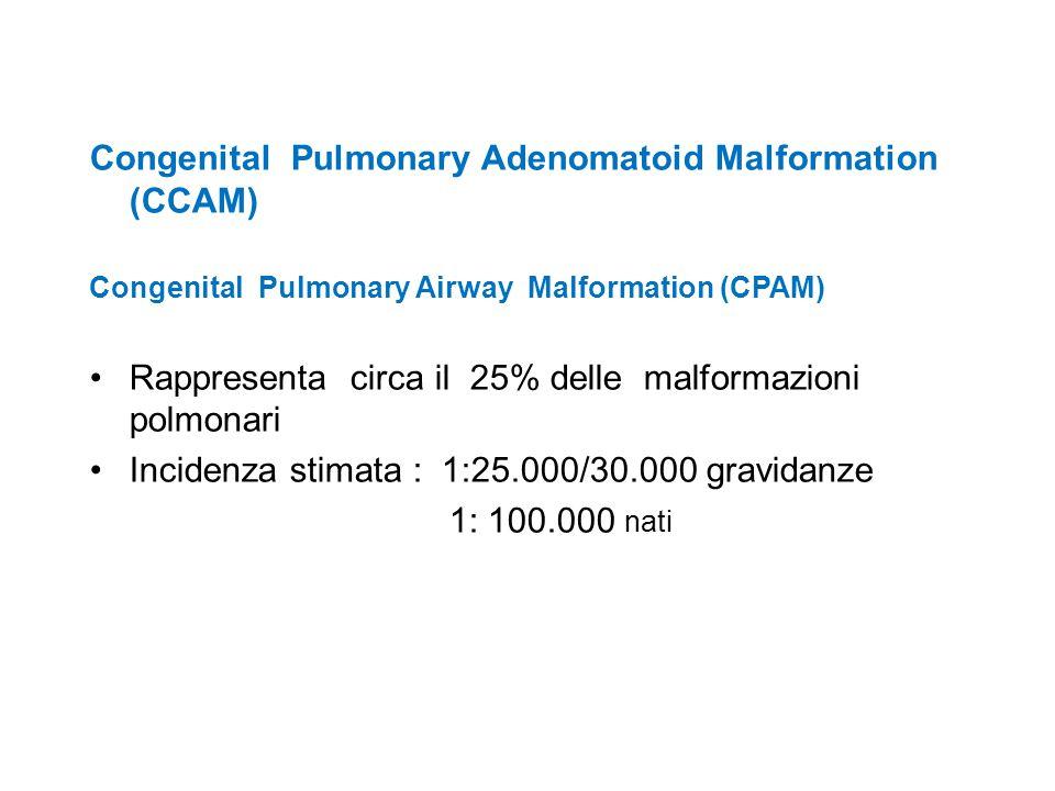 Congenital Pulmonary Adenomatoid Malformation (CCAM)