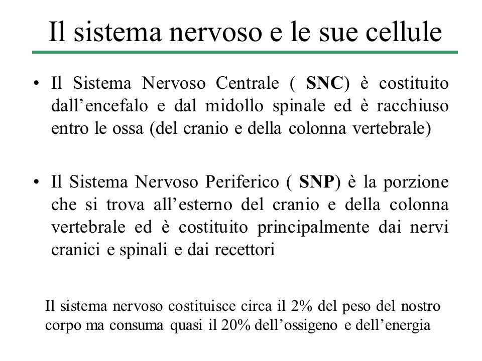 Il sistema nervoso e le sue cellule