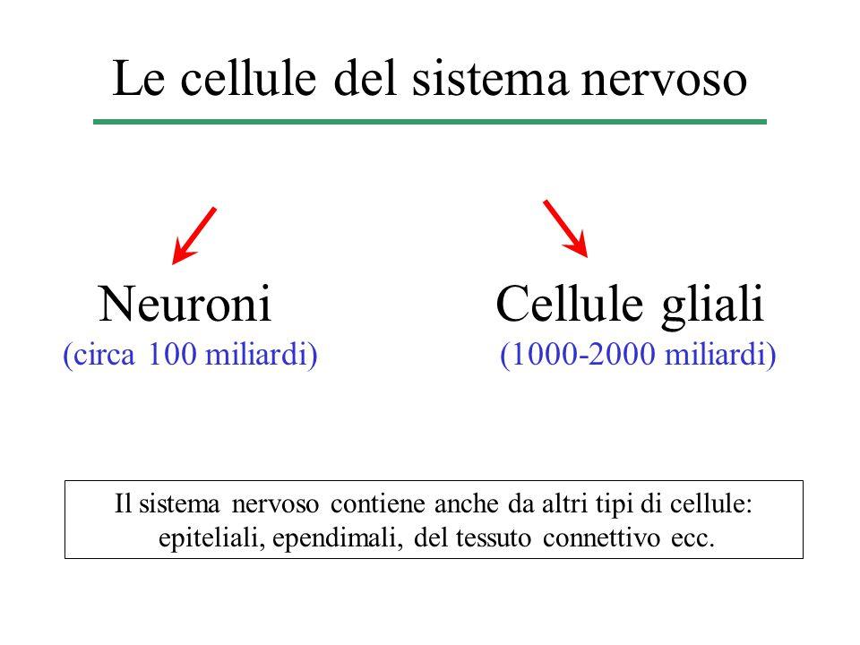 Le cellule del sistema nervoso