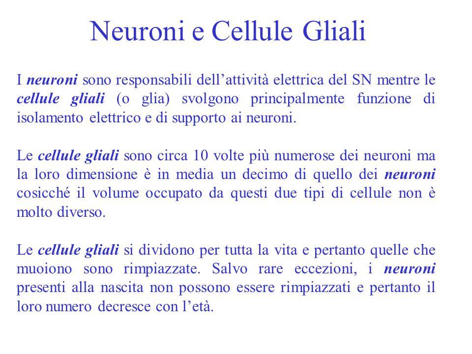Neuroni e Cellule Gliali