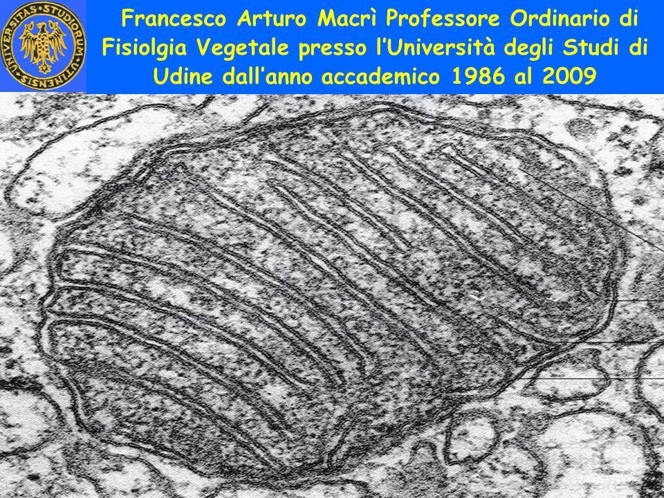 Francesco Arturo Macrì Professore Ordinario di Fisiolgia Vegetale presso l'Università degli Studi di Udine dall'anno accademico 1986 al 2009