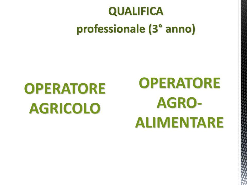 professionale (3° anno)