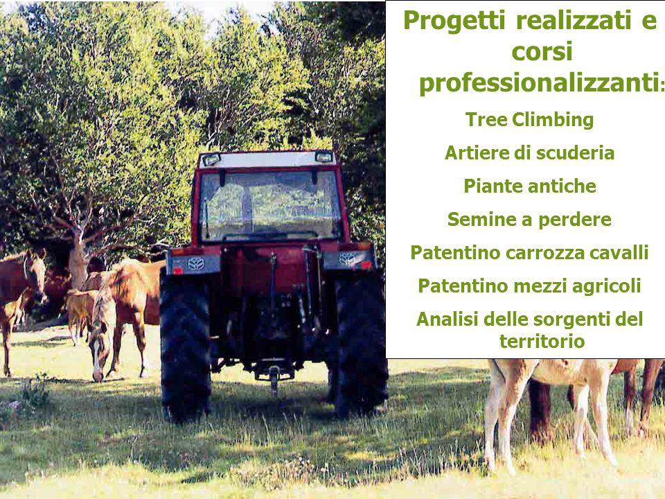 Progetti realizzati e corsi professionalizzanti: