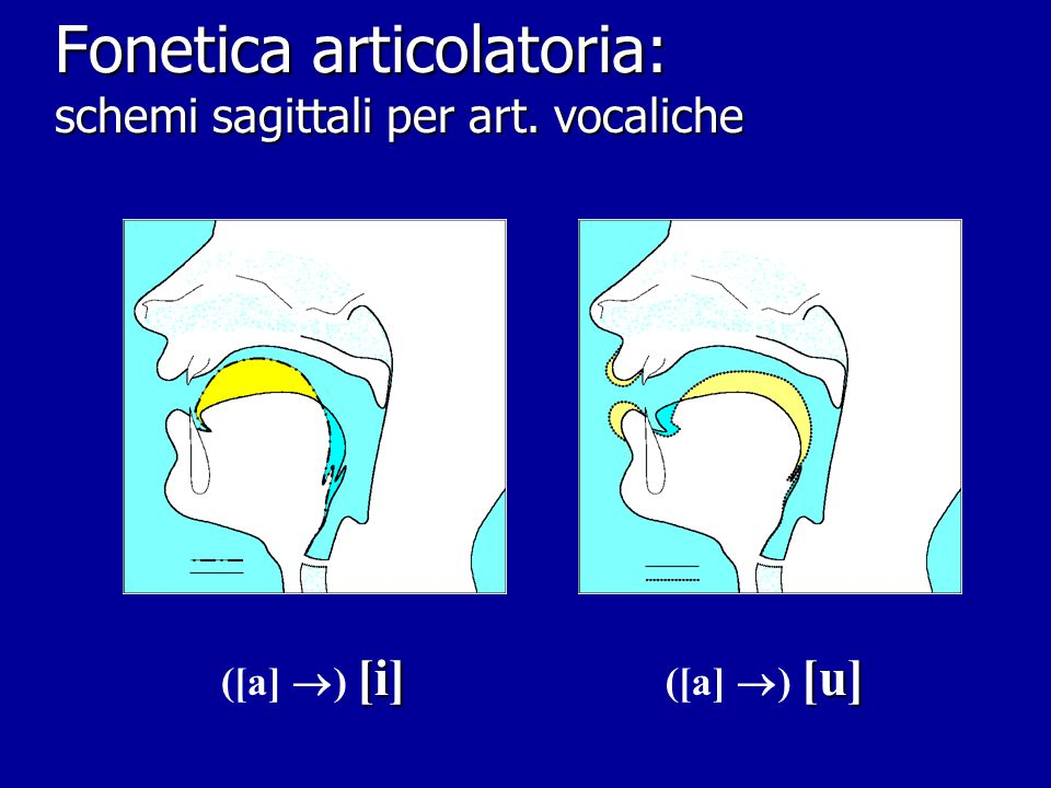 Fonetica articolatoria: schemi sagittali per art. vocaliche