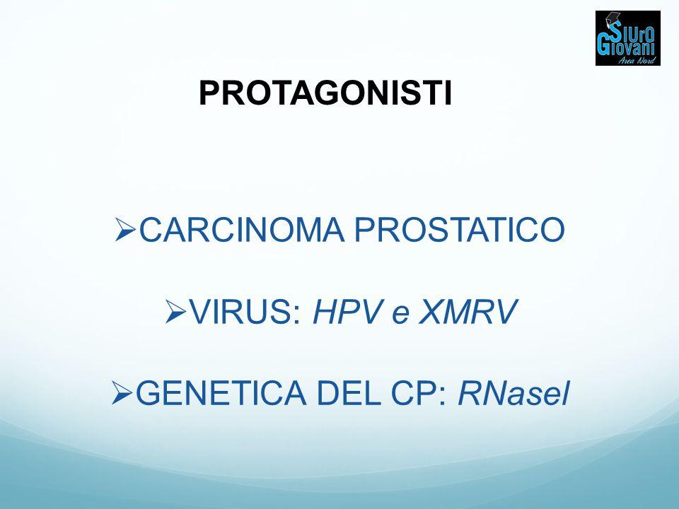 GENETICA DEL CP: RNasel