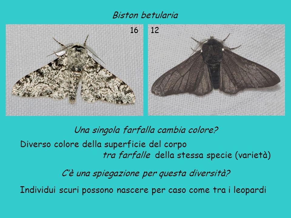 Una singola farfalla cambia colore