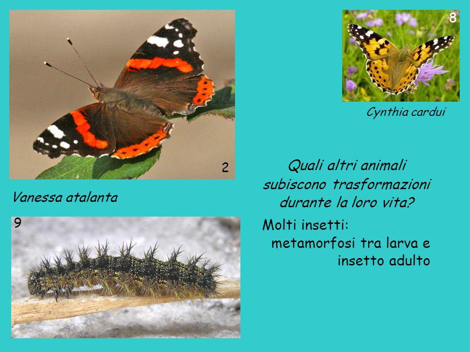 Quali altri animali subiscono trasformazioni