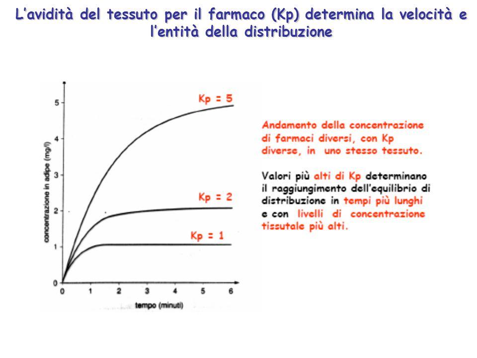 L'avidità del tessuto per il farmaco (Kp) determina la velocità e l'entità della distribuzione
