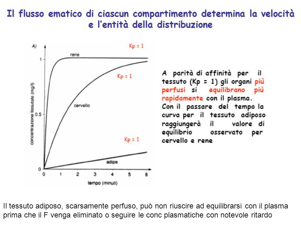 Il flusso ematico di ciascun compartimento determina la velocità e l'entità della distribuzione