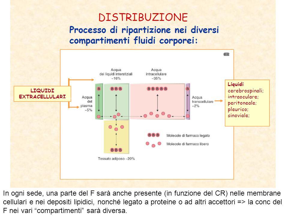 In ogni sede, una parte del F sarà anche presente (in funzione del CR) nelle membrane cellulari e nei depositi lipidici, nonché legato a proteine o ad altri accettori => la conc del F nei vari compartimenti sarà diversa.