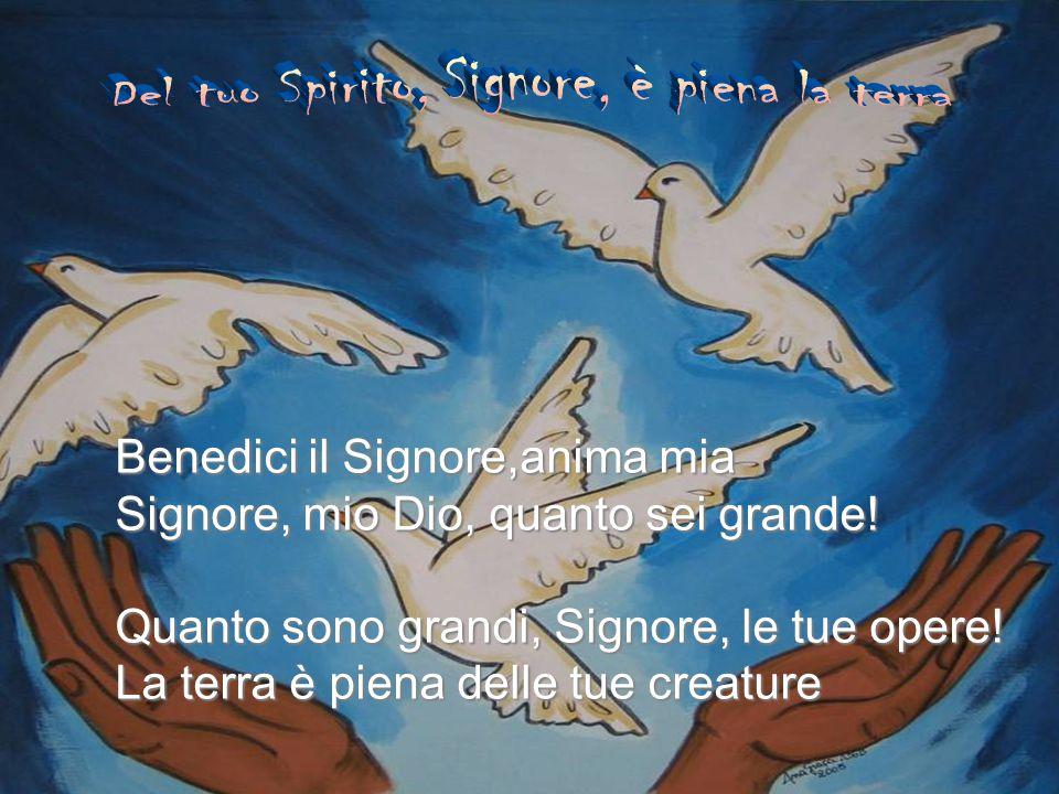Del tuo Spirito, Signore, è piena la terra