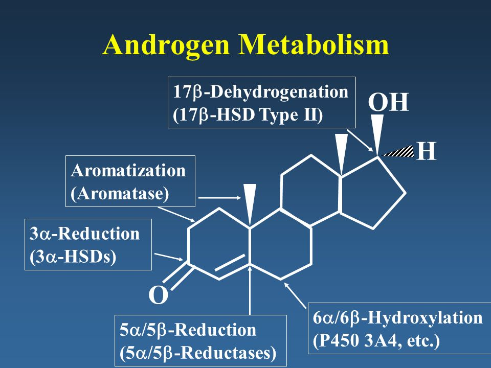 Androgen Metabolism OH H O 17b-Dehydrogenation (17b-HSD Type II)