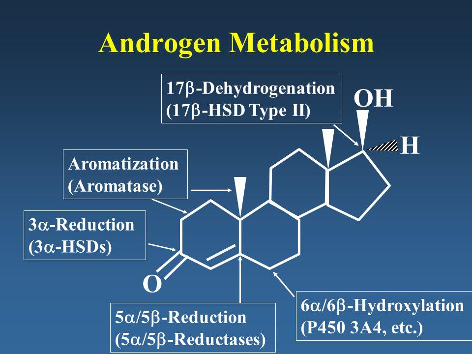 Androgen Metabolism OH H O 17b-Dehydrogenation (17b-HSD Type II)