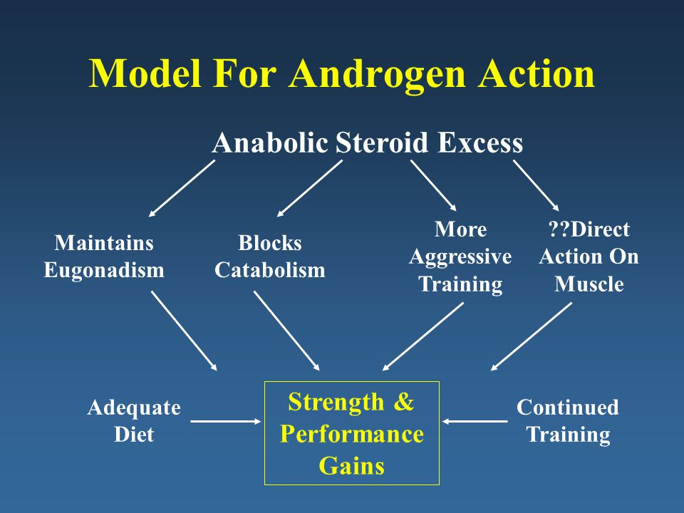 Model For Androgen Action