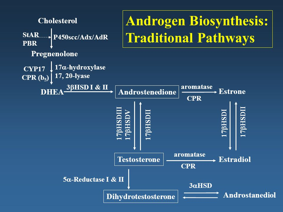 Androgen Biosynthesis: Traditional Pathways