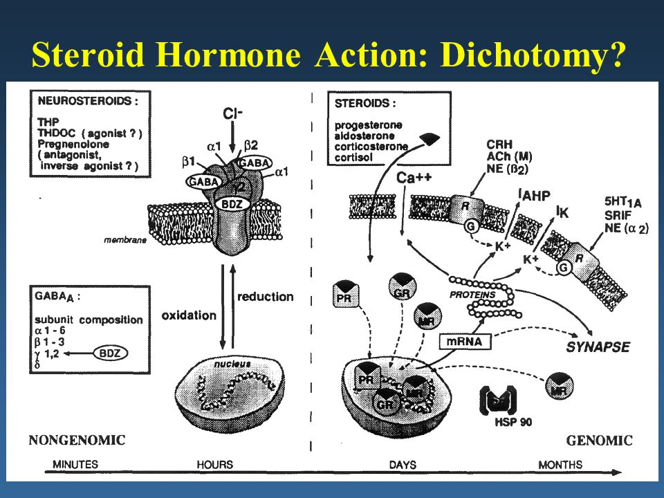Steroid Hormone Action: Dichotomy