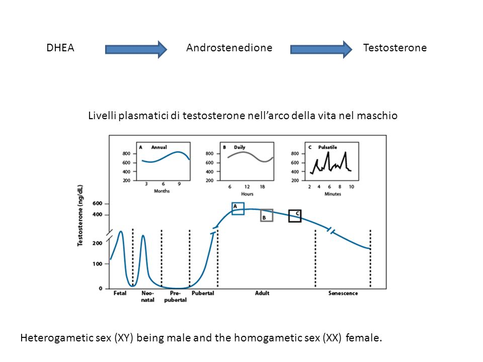 DHEA Androstenedione. Testosterone. Livelli plasmatici di testosterone nell'arco della vita nel maschio.