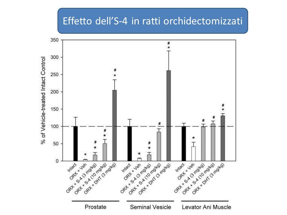 Effetto dell'S-4 in ratti orchidectomizzati