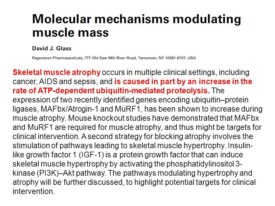 Skeletal muscle atrophy occurs in multiple clinical settings, including cancer, AIDS and sepsis, and is caused in part by an increase in the rate of ATP-dependent ubiquitin-mediated proteolysis.
