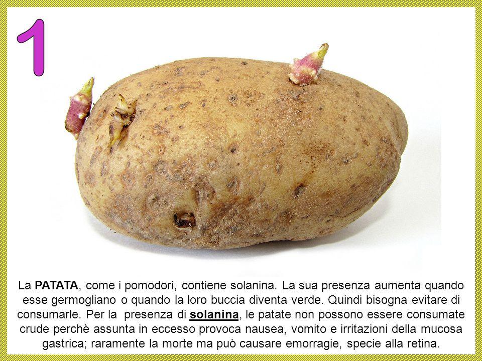 La PATATA, come i pomodori, contiene solanina