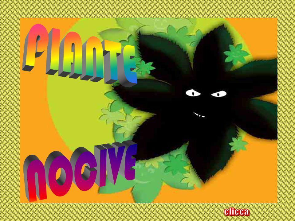 PIANTE NOCIVE clicca potenziale pericolosità di alcune piante.