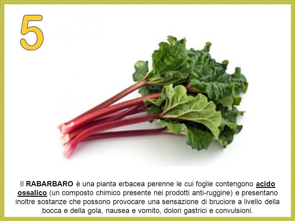 Il RABARBARO è una pianta erbacea perenne le cui foglie contengono acido ossalico (un composto chimico presente nei prodotti anti-ruggine) e presentano inoltre sostanze che possono provocare una sensazione di bruciore a livello della bocca e della gola, nausea e vomito, dolori gastrici e convulsioni.