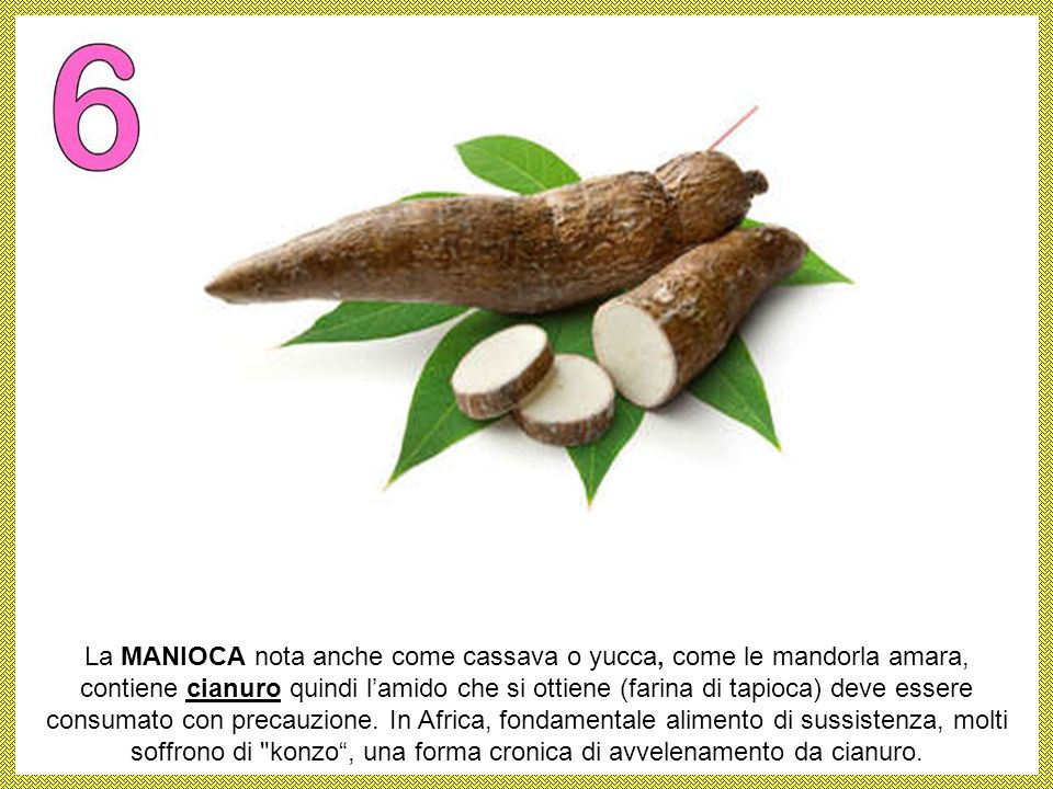 La MANIOCA nota anche come cassava o yucca, come le mandorla amara, contiene cianuro quindi l'amido che si ottiene (farina di tapioca) deve essere consumato con precauzione.