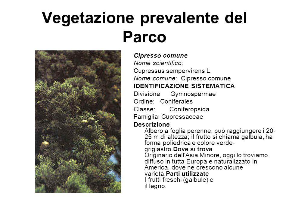 Vegetazione prevalente del Parco