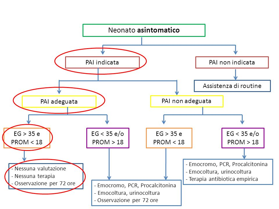 Neonato asintomatico PAI indicata PAI non indicata PAI adeguata