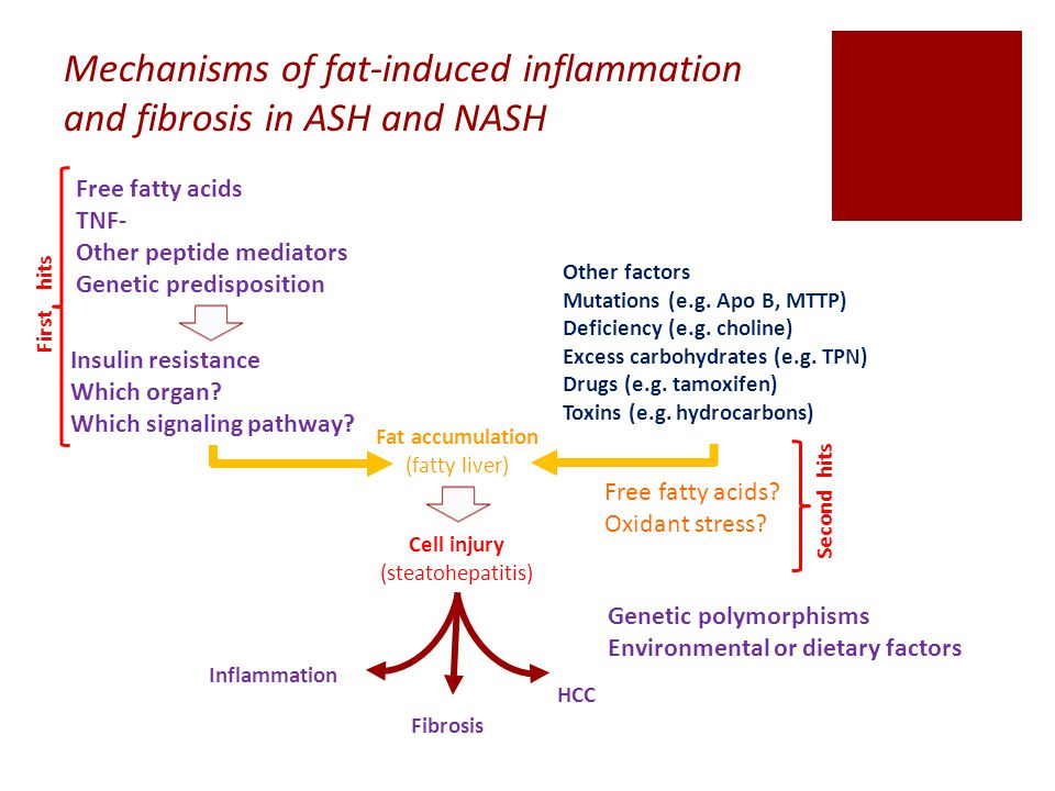 Mechanisms of fat-induced inflammation and fibrosis in ASH and NASH