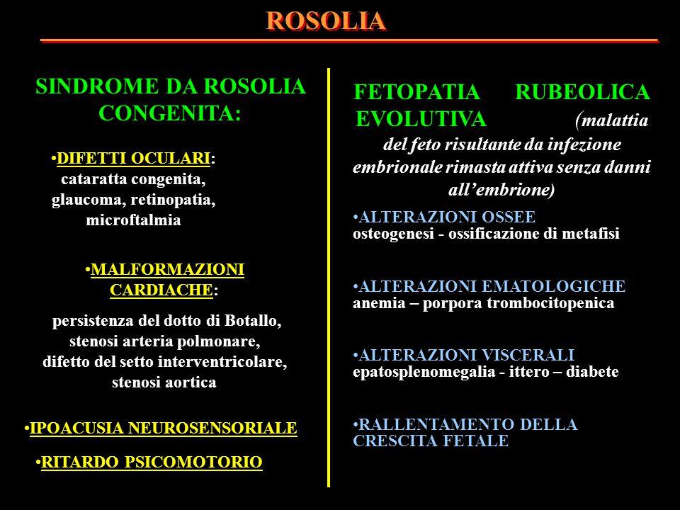 SINDROME DA ROSOLIA CONGENITA: MALFORMAZIONI CARDIACHE: