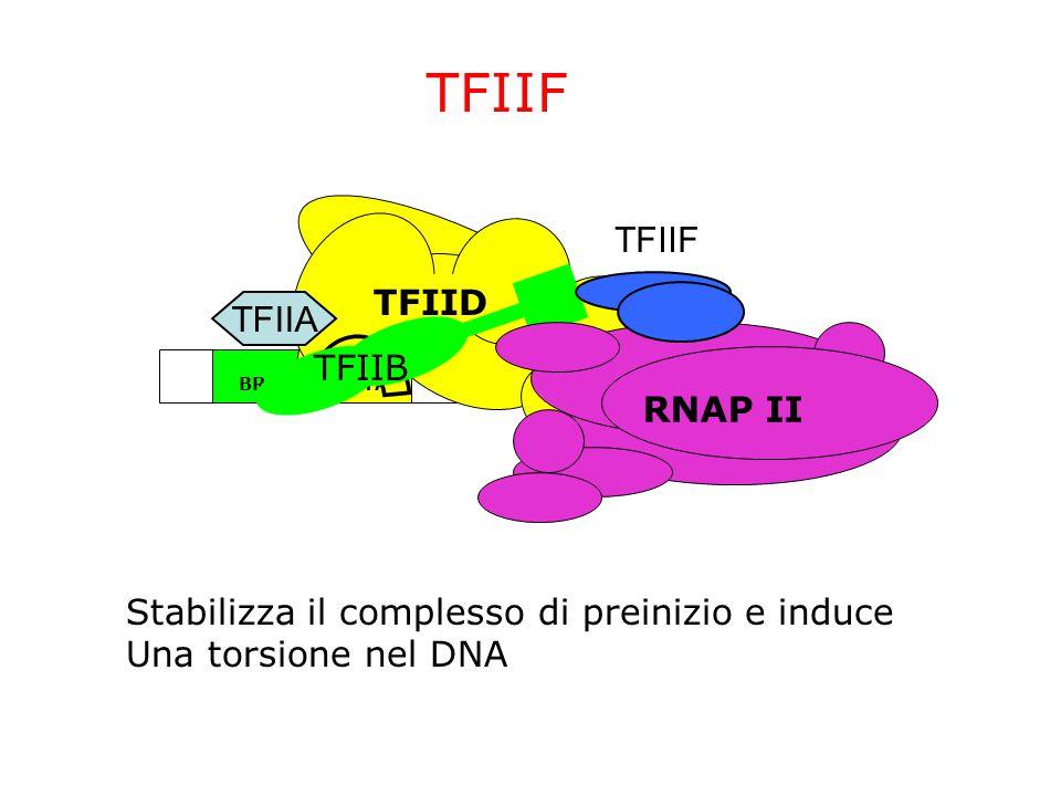 TFIIF TFIIF TFIID TFIIA TFIIB RNAP II