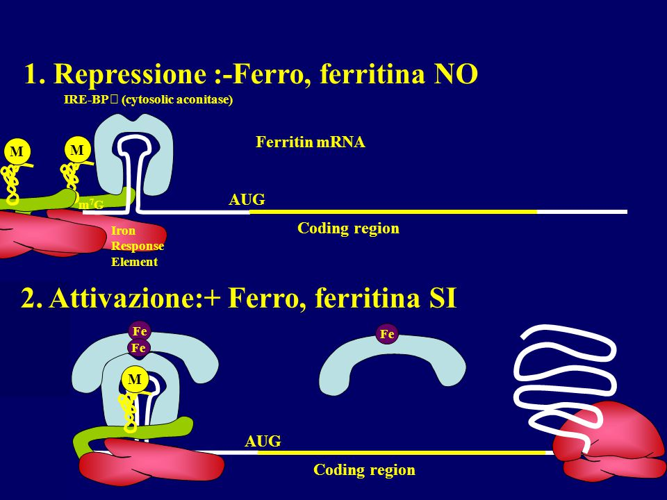 1. Repressione :-Ferro, ferritina NO