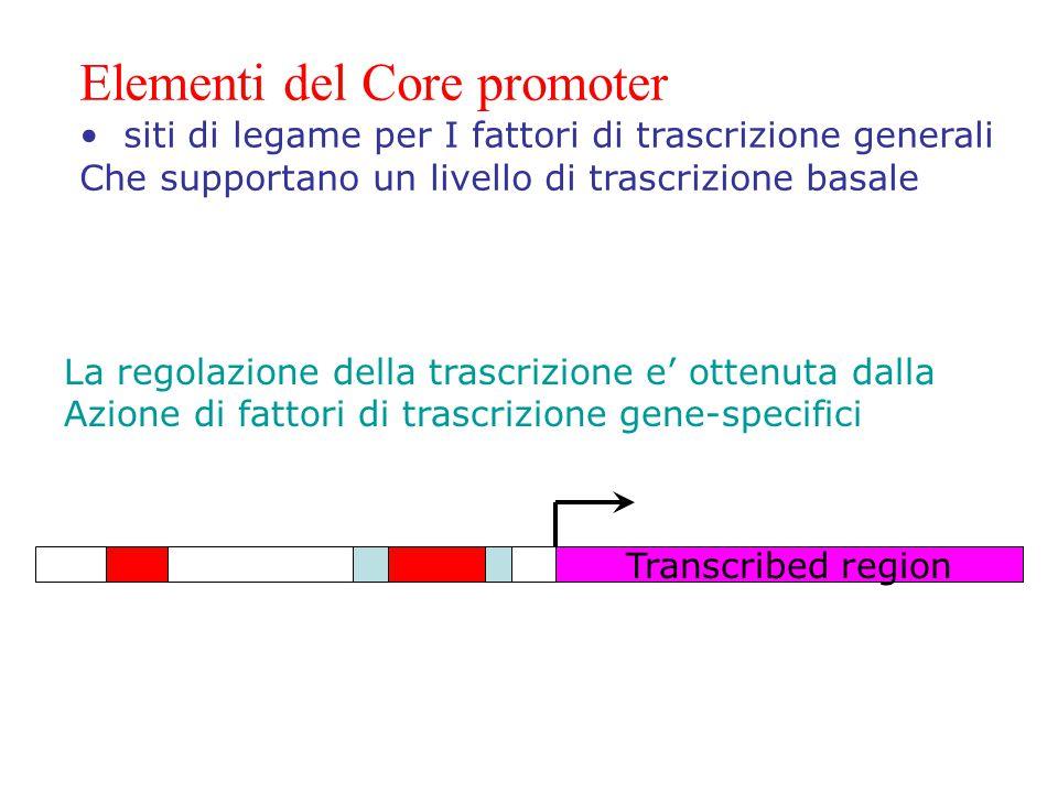 Elementi del Core promoter