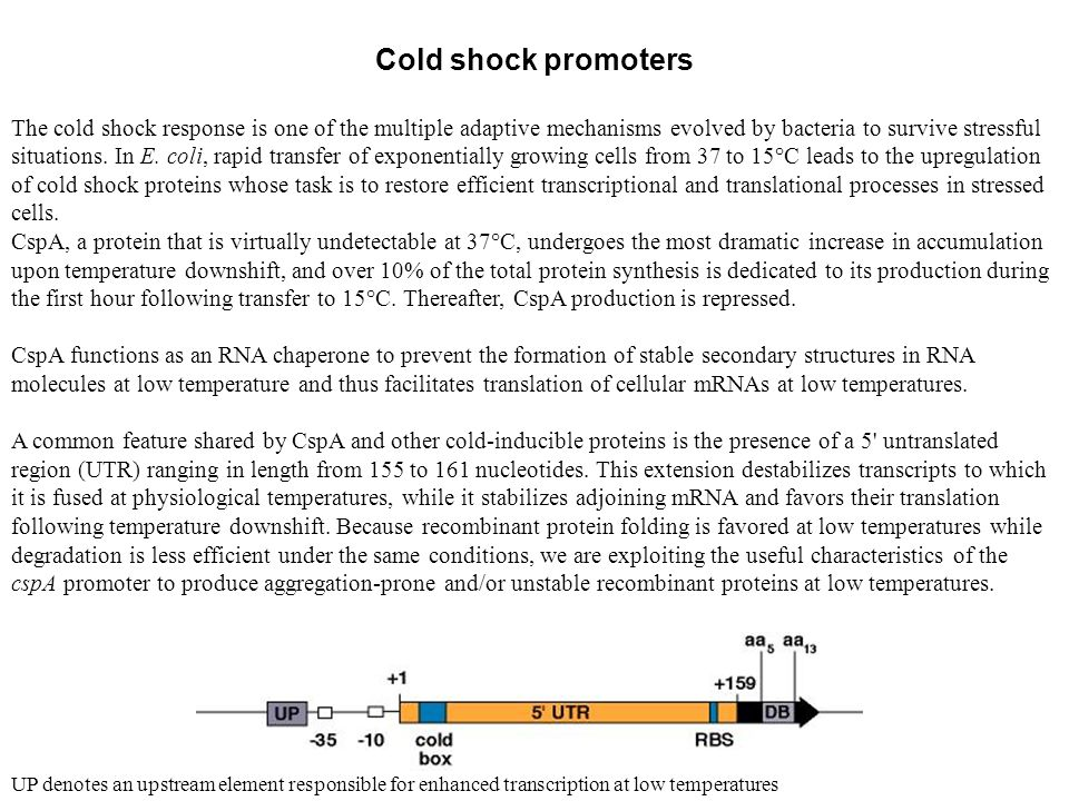 Cold shock promoters