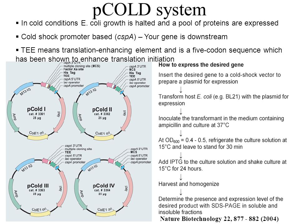 pCOLD system In cold conditions E. coli growth is halted and a pool of proteins are expressed.