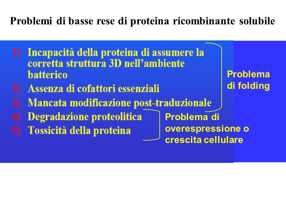 Problemi di basse rese di proteina ricombinante solubile