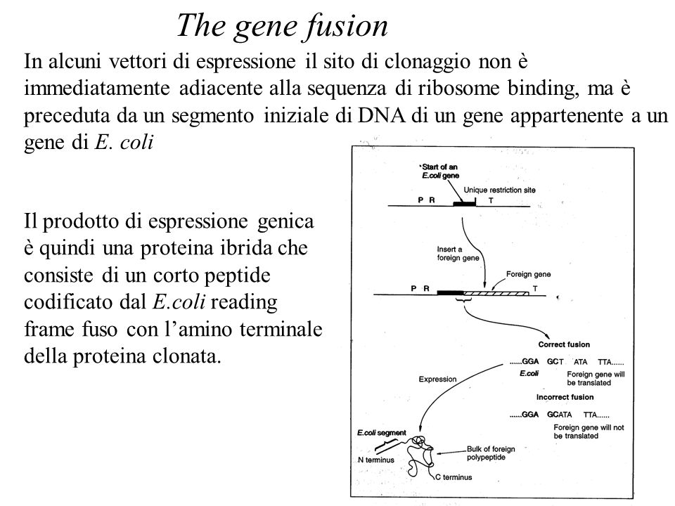 The gene fusion
