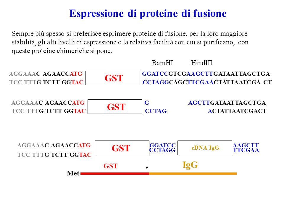 Espressione di proteine di fusione