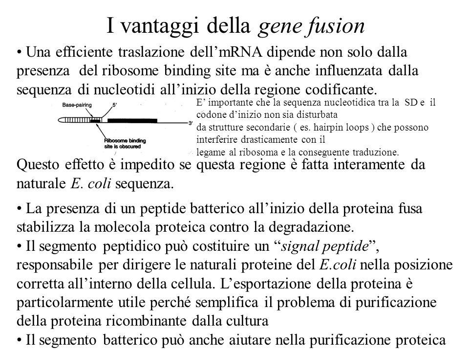 I vantaggi della gene fusion