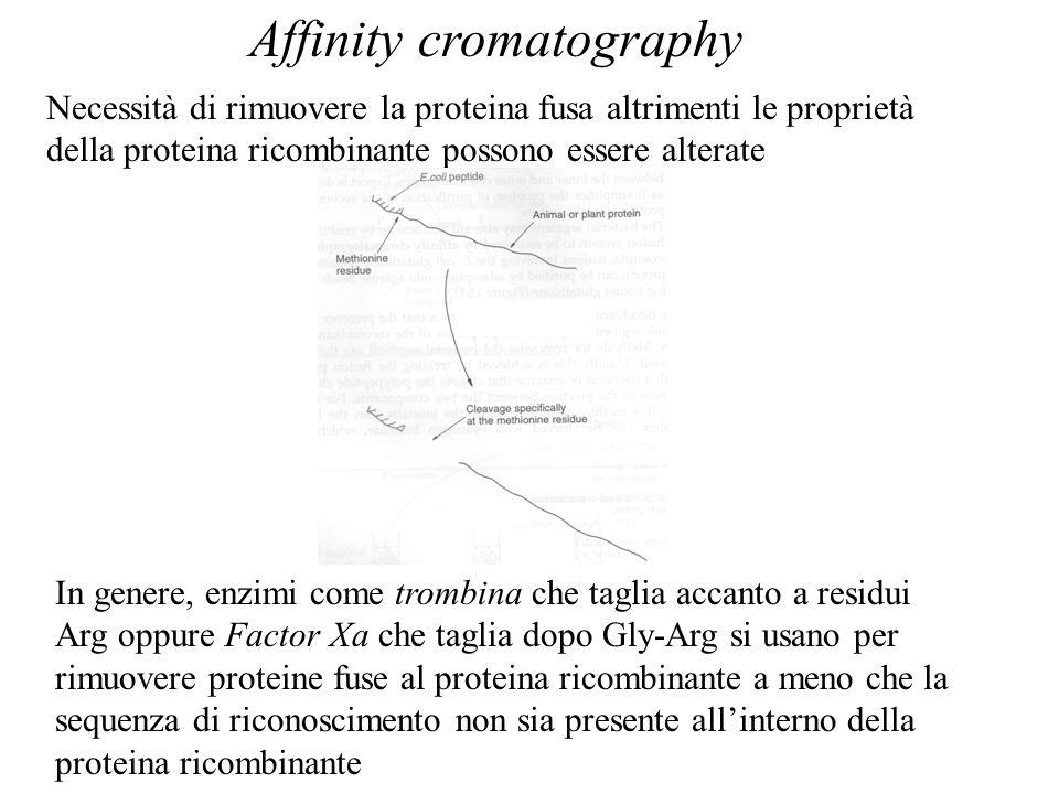 Affinity cromatography