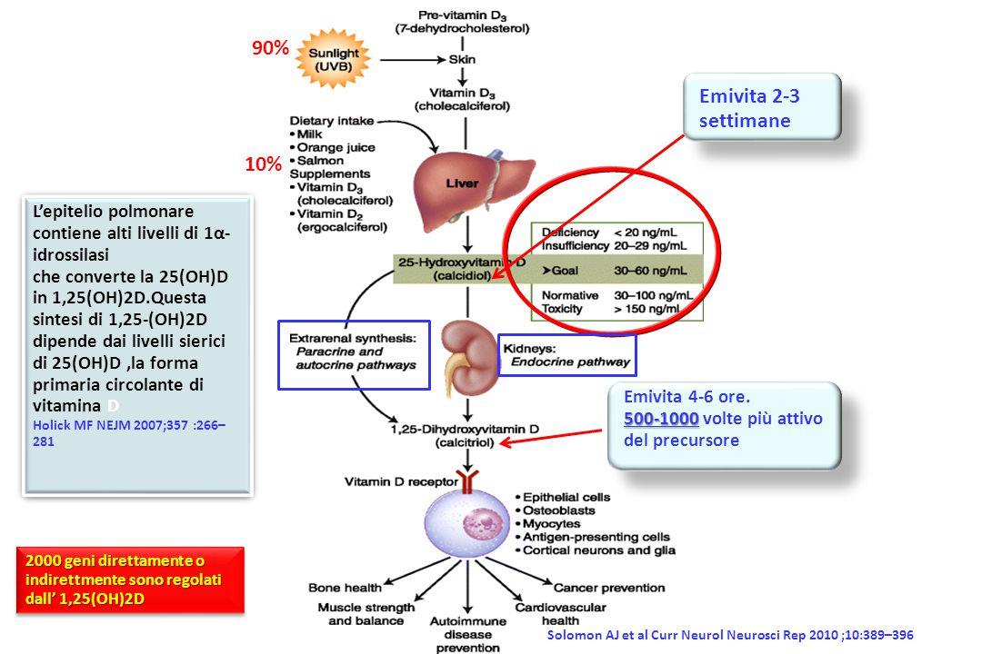 90% Emivita 2-3 settimane. 10% L'epitelio polmonare contiene alti livelli di 1α-idrossilasi.