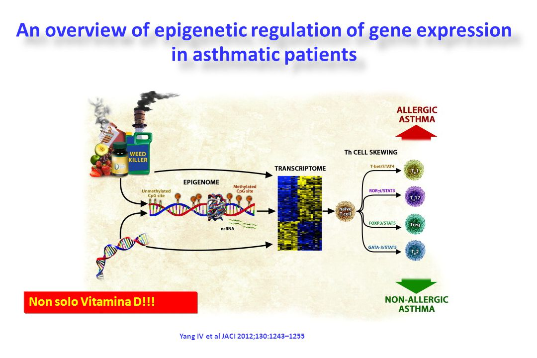 An overview of epigenetic regulation of gene expression in asthmatic patients