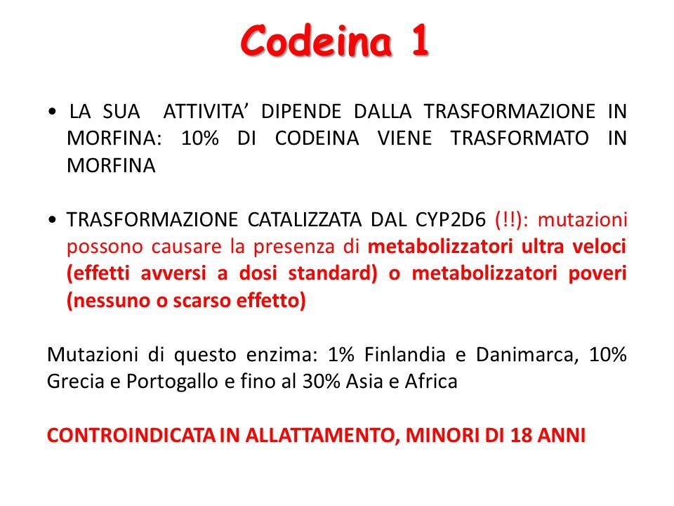 Codeina 1 • LA SUA ATTIVITA' DIPENDE DALLA TRASFORMAZIONE IN MORFINA: 10% DI CODEINA VIENE TRASFORMATO IN MORFINA.