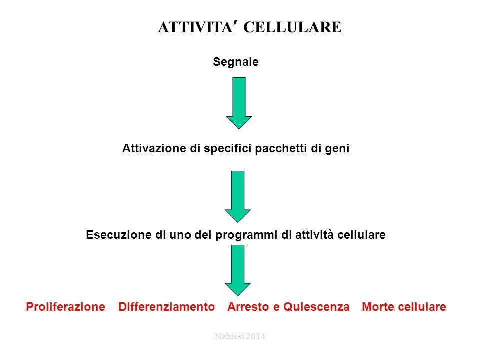 ATTIVITA' CELLULARE Segnale Attivazione di specifici pacchetti di geni